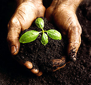 God has made the land a source of sustenance and livelihood for us and other living creatures: He has made the soil fertile to grow the vegetation upon which we and all animal life depend