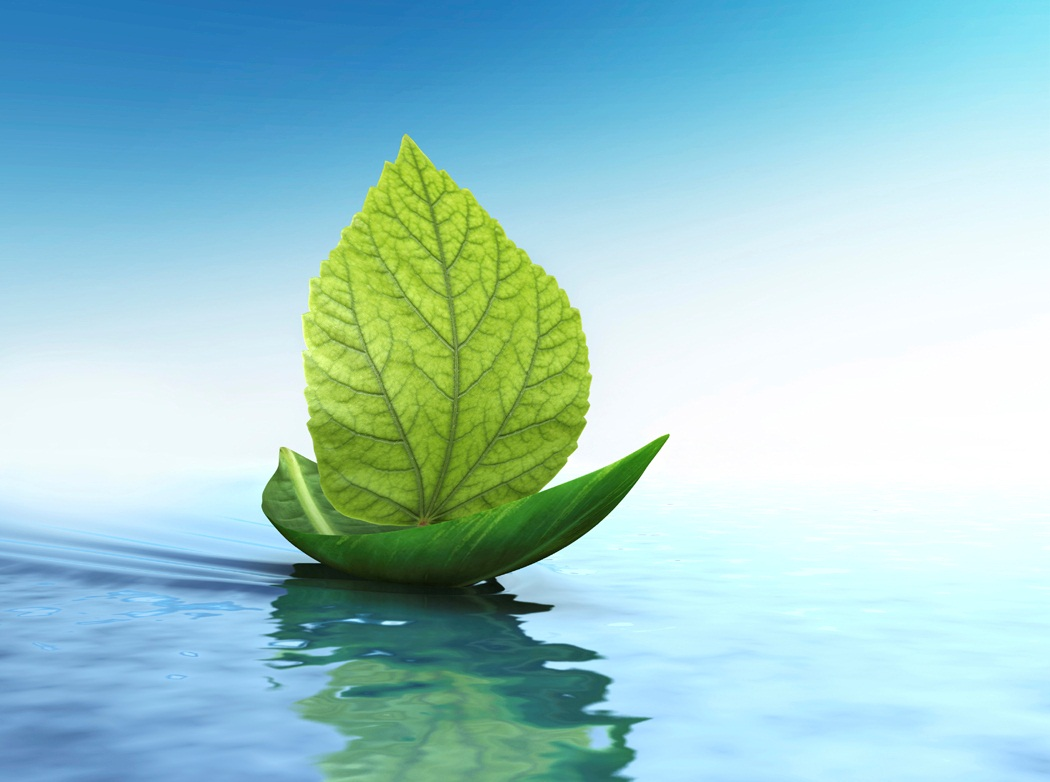 Environment and Its Elements in the Quran