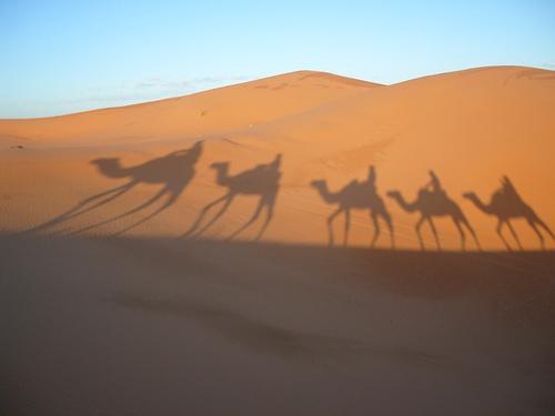 caravan- camels' shade in desert