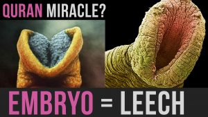 creation-of-the-embryo-between-the-quran-and-science